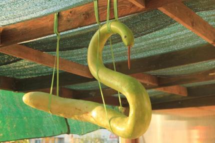 cigno-zucchina